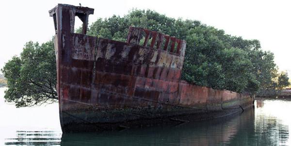 abandonne-depuis-plus-dun-siecle-un-bateau-devient-une-foret-flottante4