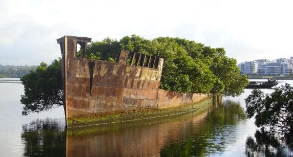 abandonne-depuis-plus-dun-siecle-un-bateau-devient-une-foret-flottanteUNE