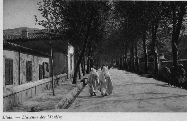 blida-l-avenue-des-moulins