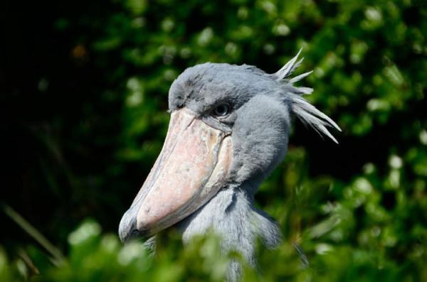 21-animaux-inhabituels-dont-vous-nauriez-jamais-soupconne-lexistence10