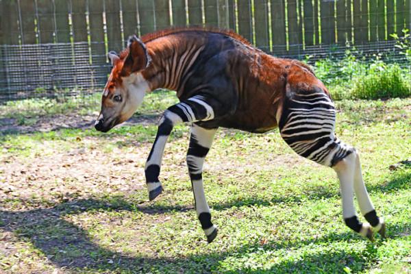 21-animaux-inhabituels-dont-vous-nauriez-jamais-soupconne-lexistence14