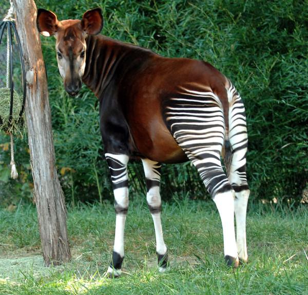 21-animaux-inhabituels-dont-vous-nauriez-jamais-soupconne-lexistence20