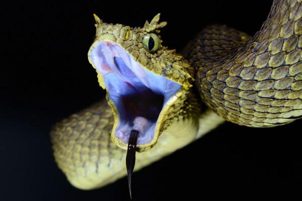 21-animaux-inhabituels-dont-vous-nauriez-jamais-soupconne-lexistence24
