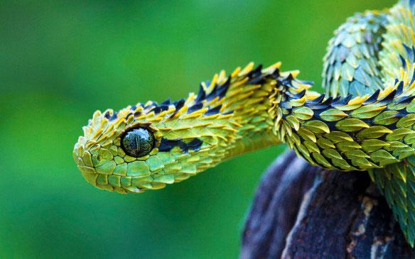 21-animaux-inhabituels-dont-vous-nauriez-jamais-soupconne-lexistence25