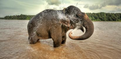 elephant pompier