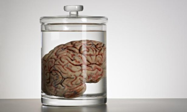 vente de cerveau