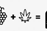 Le cannawine : ce drôle de vin vert au cannabis